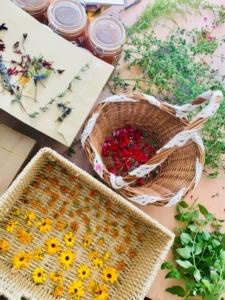 Chambre-dhotes-plantes aromatiques-domaine-de-rochebelle-gard-cevennes-stage-poterie
