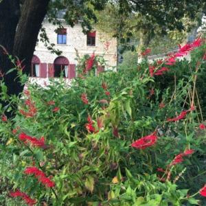 Chambre-dhotes-domaine-de-rochebelle-gard-cevennes-plantes médicinales-aromatiques