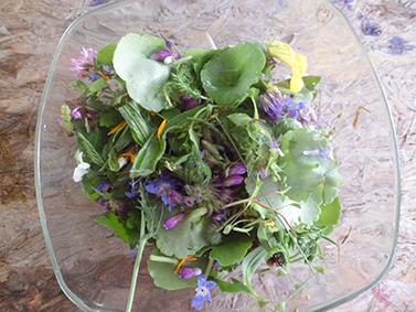 cuisiner-plantes-gard