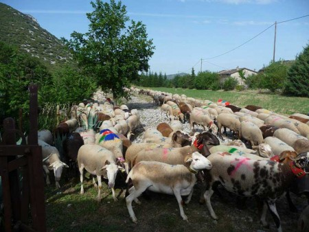 tourisme local la transhumance